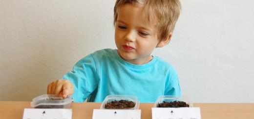 Jak jsme zjistili, co potřebují rostlinky k životu