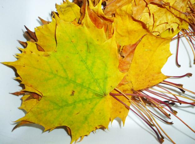 podzimní listy na sovičky