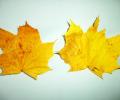 podzimni_sovicky_07