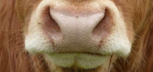 poznáváme zvířátka - rozvoj zraku, smyslů